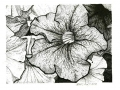 pansy b&w stippled